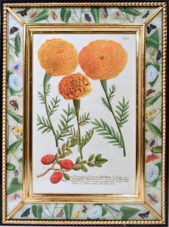Johann Wilhelm Weinmann 18th Century Johann Weinmann Engravings of Flowers a set of Twelve - 1619393