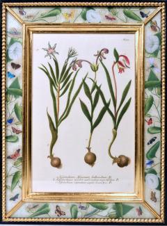 Johann Wilhelm Weinmann 18th Century Johann Weinmann Engravings of Flowers a set of Twelve - 1619394