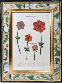Johann Wilhelm Weinmann 18th Century Johann Weinmann Engravings of Flowers a set of Twelve - 1619395