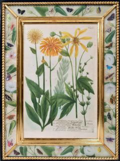 Johann Wilhelm Weinmann 18th Century Johann Weinmann Engravings of Flowers a set of Twelve - 1619399