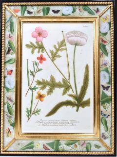 Johann Wilhelm Weinmann 18th Century Johann Weinmann Engravings of Flowers a set of Twelve - 1619401