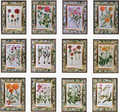 Johann Wilhelm Weinmann 18th Century Johann Weinmann Engravings of Flowers a set of Twelve - 1622961