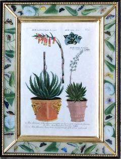 Johann Wilhelm Weinmann Johann Weinmann Pair of Botanical Engravings with Plants in Pots - 1619365