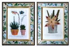 Johann Wilhelm Weinmann Johann Weinmann Pair of Botanical Engravings with Plants in Pots - 1619367