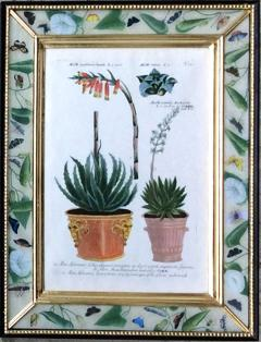 Johann Wilhelm Weinmann Johann Weinmann Pair of Botanical Engravings with Plants in Pots - 1771115