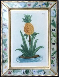 Johann Wilhelm Weinmann Johann Weinmann Set of Six Botanical Engravings with Plants in Pots - 1619413