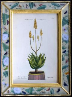 Johann Wilhelm Weinmann Johann Weinmann Set of Six Botanical Engravings with Plants in Pots - 1619414