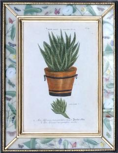 Johann Wilhelm Weinmann Johann Weinmann Set of Six Botanical Engravings with Plants in Pots - 1619415