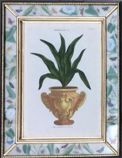 Johann Wilhelm Weinmann Johann Weinmann Set of Six Botanical Engravings with Plants in Pots - 1619419