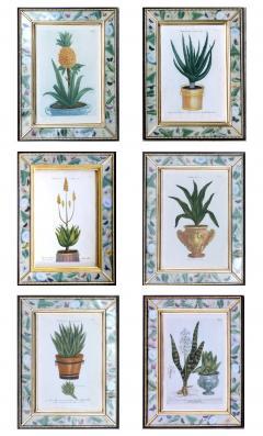 Johann Wilhelm Weinmann Johann Weinmann Set of Six Botanical Engravings with Plants in Pots - 1619420