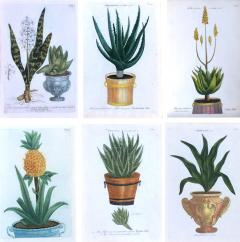 Johann Wilhelm Weinmann Johann Weinmann Set of Six Botanical Engravings with Plants in Pots - 1619501