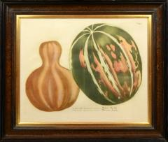 Johann Wilhelm Weinmann Set of Four Gourds - 781420