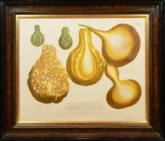 Johann Wilhelm Weinmann Set of Four Gourds - 781422