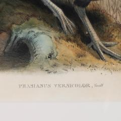 John Gould Phasianus Versicolor Vieill - 1934568
