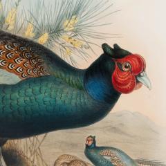 John Gould Phasianus Versicolor Vieill - 1934569