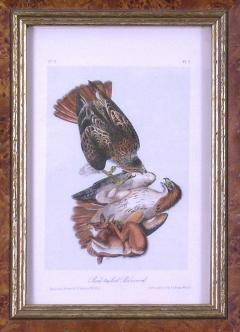 John James Audubon John James Audubon Audubon Red Tailed Buzzard 1839 - 1530907