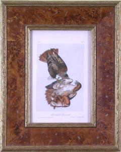 John James Audubon John James Audubon Audubon Red Tailed Buzzard 1839 - 1556337