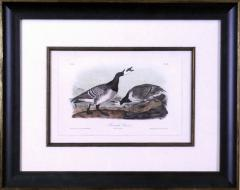 John James Audubon John James Audubon Bernacle Goose 1856 - 1554321