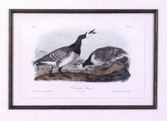 John James Audubon John James Audubon Bernacle Goose 1856 - 1555195