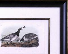 John James Audubon John James Audubon Bernacle Goose 1856 - 1555197