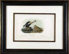 John James Audubon John James Audubon Bernacle Goose 1856 - 1555272