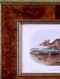 John James Audubon John James Audubon Black tailed Deer 1849 - 1555381