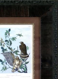John James Audubon John James Audubon Broad Winged Buzzard 1856 - 1554031