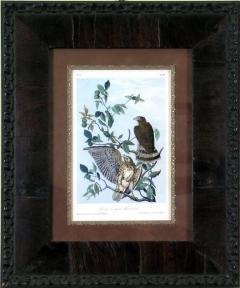 John James Audubon John James Audubon Broad Winged Buzzard 1856 - 1554035