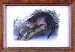 John James Audubon John James Audubon Canada Otter 1849 - 1530819