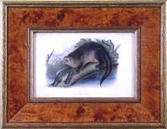 John James Audubon John James Audubon Canada Otter 1849 - 1555382