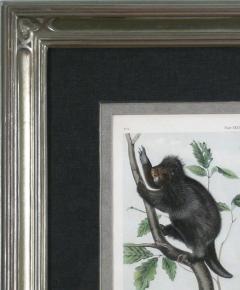 John James Audubon John James Audubon Canada Porcupine 1856 - 1530914