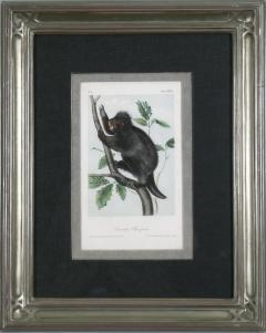 John James Audubon John James Audubon Canada Porcupine 1856 - 1555329