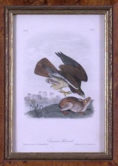 John James Audubon John James Audubon Common Buzzard 1839 - 1530889