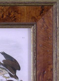 John James Audubon John James Audubon Common Buzzard 1839 - 1530892