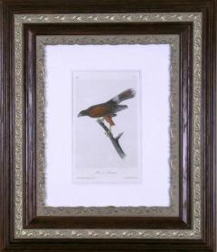 John James Audubon John James Audubon Harriss Buzzard 1856 - 1554061