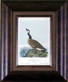 John James Audubon John James Audubon Hutchins Goose 1856 - 1542225