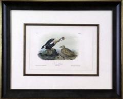 John James Audubon John James Audubon King Duck 1856 - 1542226