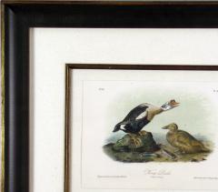 John James Audubon John James Audubon King Duck 1856 - 1555267