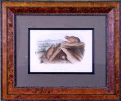 John James Audubon John James Audubon Little Chief Hare Rock Rabbit 1854 - 1556396