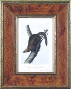 John James Audubon John James Audubon Pennants Marlon or Fischer 1849 - 1555346