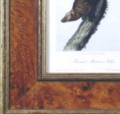 John James Audubon John James Audubon Pennants Marlon or Fischer 1849 - 1555347
