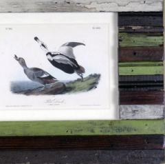 John James Audubon John James Audubon Pied Duck 1856 - 1554055