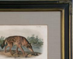 John James Audubon John James Audubon Red Texas Wolf Audubon Animal 1854 - 1530921