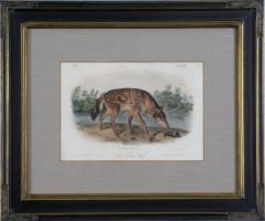 John James Audubon John James Audubon Red Texas Wolf Audubon Animal 1854 - 1555327