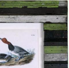 John James Audubon John James Audubon Red headed Duck 1856 - 1554052