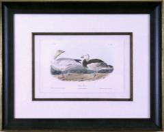 John James Audubon John James Audubon Snow Goose 1856 - 1554057