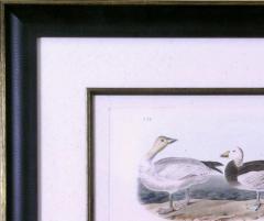 John James Audubon John James Audubon Snow Goose 1856 - 1554059