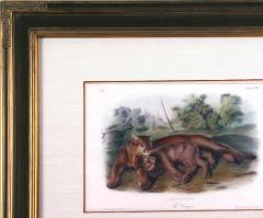 John James Audubon John James Audubon The Cougars 1839 - 1555374