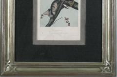 John James Audubon John James Audubon Virginia Opossum 1856 - 1530917