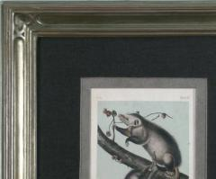 John James Audubon John James Audubon Virginia Opossum 1856 - 1530920